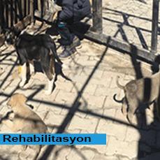 rehabilitasyongezileridostdernegi