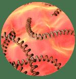Leptospiroz Enfeksiyonu Leptospirosis